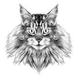 Вектор эскиза стороны кота Стоковые Фото