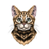 Вектор эскиза стороны кота иллюстрация вектора