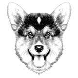 вектор эскиза Corgi Welsh породы собаки бесплатная иллюстрация
