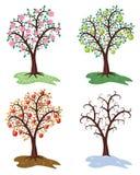 вектор 4 сезона яблони Стоковое Изображение
