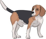 вектор beagle Орегон пляжа Стоковое Изображение RF