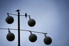 вектор birdhouses установленный птицами Стоковое Изображение RF