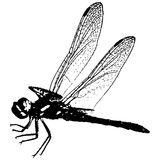 вектор dragonfly Стоковые Изображения