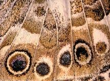 вектор eps бабочки 10 предпосылок Стоковое Изображение RF
