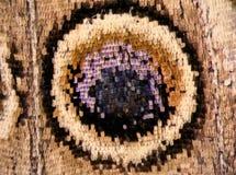 вектор eps бабочки 10 предпосылок Стоковое фото RF
