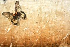 вектор eps бабочки 10 предпосылок Стоковая Фотография