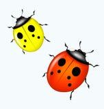 вектор ladybird Стоковое Изображение