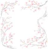 вектор sakura цветения Стоковые Изображения