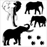 Вектор silhouetted слоном Стоковое Изображение RF