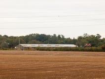 Великобритания коричневеет птиц дня overcast поля фермы обрабатывая землю вспаханная индустрия Стоковое Фото