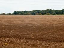 Великобритания коричневеет птиц дня overcast поля фермы обрабатывая землю вспаханная индустрия Стоковое Изображение