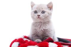 великобританский красный цвет котенка шлема Стоковое Изображение RF