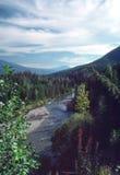 великобританский лось River Valley Канады columbia Стоковое Изображение