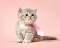 великобританское shorthair котенка стоковые фото