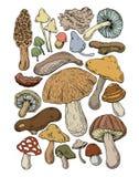 Величает грибок еды естественный иллюстрация штока