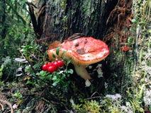 Величает и куст cowberry в лесе Стоковое Фото