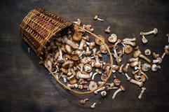 Величает mellea Armillaria пластинчатых грибов меда на деревянном столе Стоковые Изображения RF