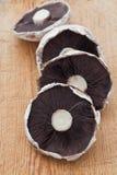 величает portobello Стоковые Фото