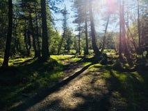 Величественное королевство леса Стоковое Фото