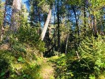 Величественное королевство леса Стоковое фото RF