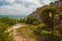 Величественные руины в Tulum Tulum курортный город на побережье Mexicos карибском тринадцатый век, огороженные майяские археологи стоковое фото