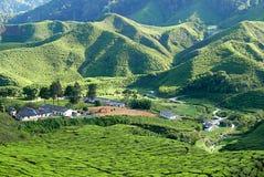Величественный взгляд ландшафта малой деревни в долине плантации чая гористых местностей Pahang Малайзии Камерона стоковые изображения rf