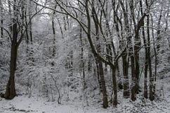 Величественный взгляд снежного леса в парке зимы, Bankya Стоковое Изображение