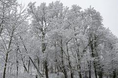 Величественный взгляд снежного леса в парке зимы, Bankya Стоковая Фотография