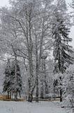 Величественный взгляд снежных деревьев в парке зимы, Bankya Стоковая Фотография RF