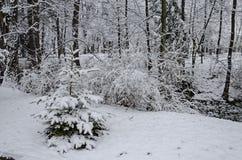 Величественный взгляд снежных деревьев в парке зимы, Bankya Стоковые Фотографии RF