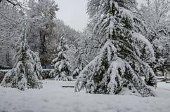 Величественный взгляд снежных деревьев в парке зимы, Bankya Стоковая Фотография