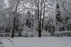 Величественный взгляд снежных деревьев в парке зимы, Bankya Стоковое Фото
