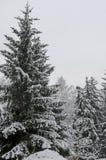 Величественный взгляд снежных деревьев в парке зимы, Bankya Стоковое фото RF