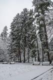 Величественный взгляд снежных деревьев и стенд в зиме паркуют, Bankya Стоковая Фотография