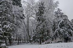 Величественный взгляд снежных деревьев и стенд в зиме паркуют, Bankya Стоковые Фотографии RF