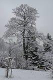 Величественный взгляд снежных деревьев и nook ребенка в зиме паркуют, Bankya Стоковые Изображения