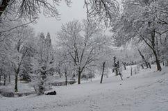 Величественный взгляд снежных деревьев и toboggan сползают в парк зимы, Bankya Стоковое Изображение RF