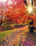 Величественный ландшафт с деревьями осени в лесе gloving в солнечном свете Стоковая Фотография RF