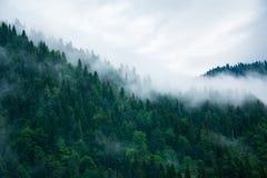 Величественный ландшафт, туман над дорогой стоковые фотографии rf