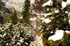 Величие природы Парк Tatransky narodny tatry vysoke Словакия стоковое изображение