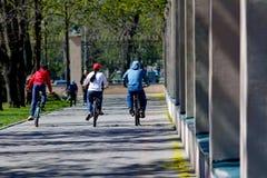 3 велосипеда людей ехать в парке Стоковая Фотография