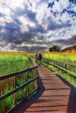 Велосипедисты к облакам стоковое фото rf