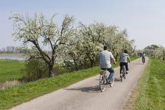 Велосипедисты на Betuwe стоковые изображения rf