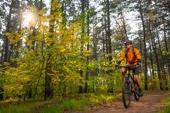 Велосипедист в апельсине ехать горный велосипед на следе в красивом Lit соснового леса к яркое Солнце Стоковая Фотография RF