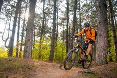 Велосипедист в апельсине ехать горный велосипед на следе в красивом Lit соснового леса к яркое Солнце Стоковые Изображения RF