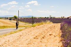 Велосипедист путешествуя через поля лаванды стоковое изображение