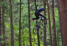 Велосипедист эффектного выступления фристайла в среднем воздухе очень высоко с деревьями в предпосылке Стоковое Фото