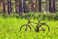 Велосипед в траве в лесе Сибире, России Стоковая Фотография