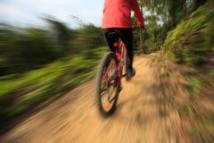 Велосипед катания женщины на горной тропе леса Стоковые Фото