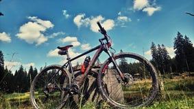 велосипед велосипед перспектива горы рук пущи фокуса поля глубины велосипедиста отмелая стоковая фотография rf